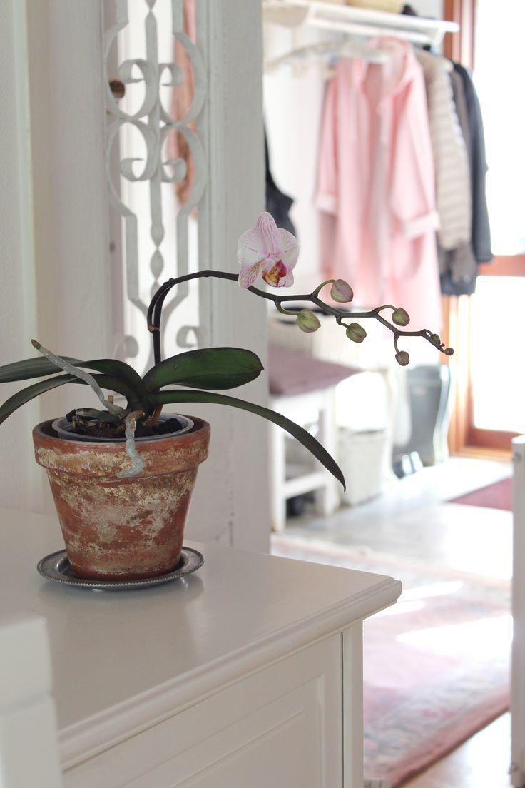 Orchid ettrottmonogram.blogspot.se