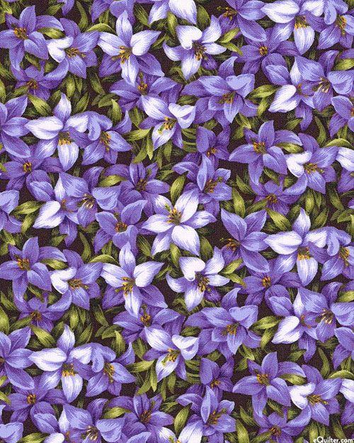 Азиатский сад - Сладкий Цветы - Фиолетовый