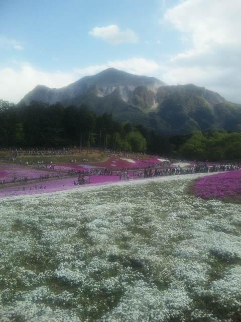 芝桜@羊山公園