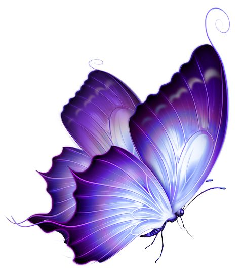 purple-butterfly-png.png (480×538)