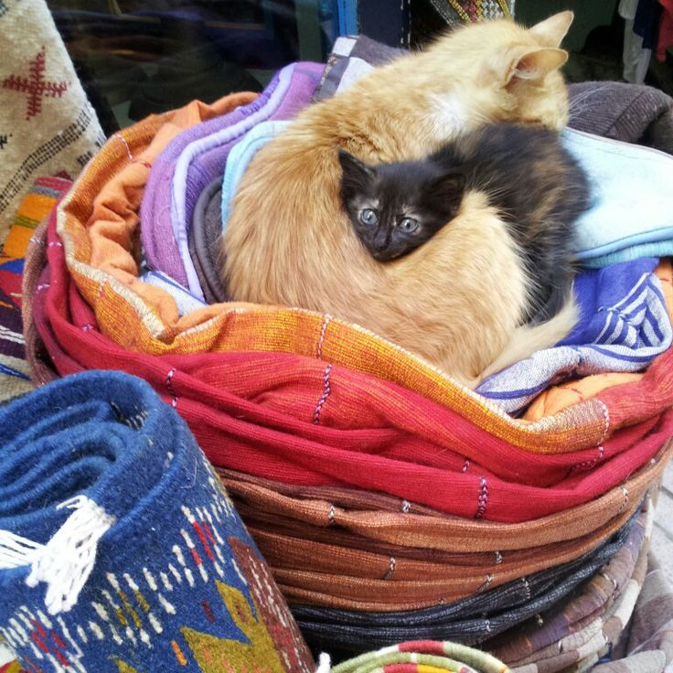 #Maroko, #Marocco, #As-Sawira, #Essaouira, #cats, #carpets, #instagram, #photography