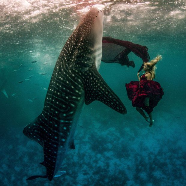 GORGEOUS PHOTO! Underwater model Hannah Fraser swims with a whale shark in Oslob, Philippines, for a one-of-a-kind photo-session. The stunt was the brainchild of US photographers Shawn Heinrichs and Kristian Schmidt.