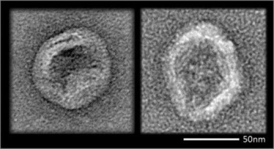 Cloaked DNA nanodevices evade immune system detection