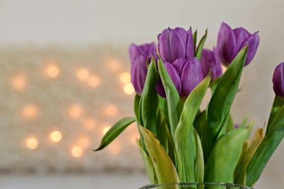 Tulips moments-bytiia.blogspot.fi