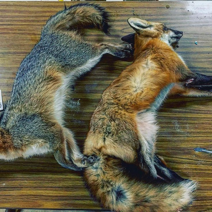 Alaska Wildlife Rugs And Taxidermy Wasilla Ak: 25+ Best Ideas About Wildlife Conservation On Pinterest