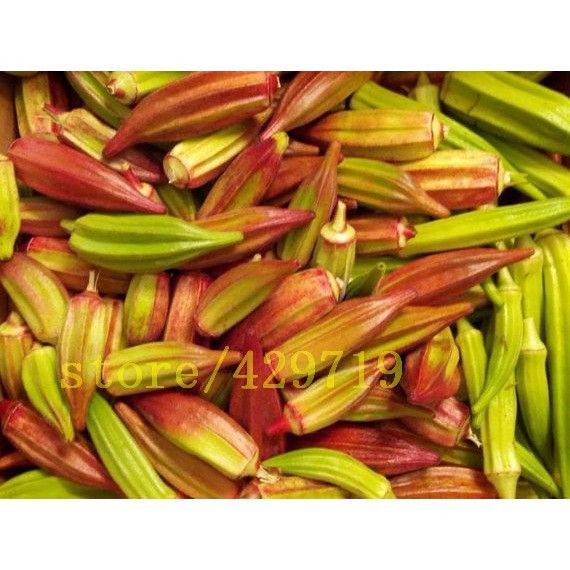 Rare Red and Green Okra Seeds