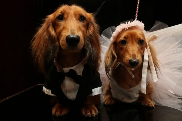 "Matrimonio ""canino"" da record e il ricavato va in beneficenza"
