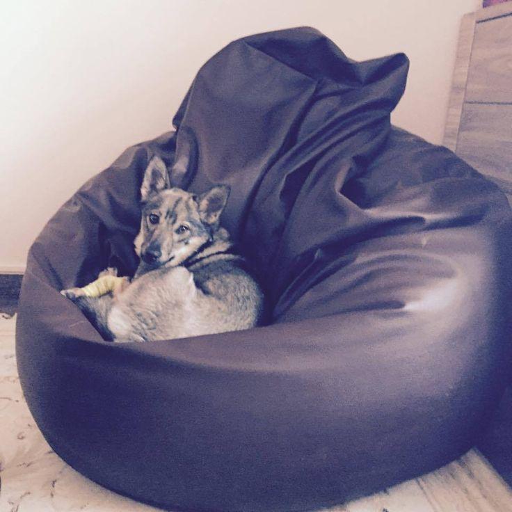 Jak widać na załączonym obrazku, z naszych puf są zadowoleni klienci wszelkiej proweniencji! :-)  #woreksako #zwierzaki #psy #kundelki #pufasako #megasako #pufypl #furini