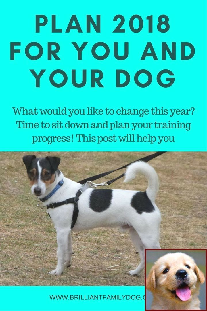 House Training A Puppy Without A Crate And Dog Behavior Getting