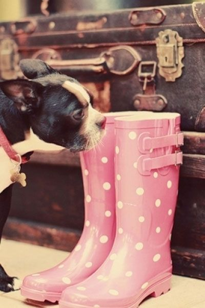 Polka dot rain boots