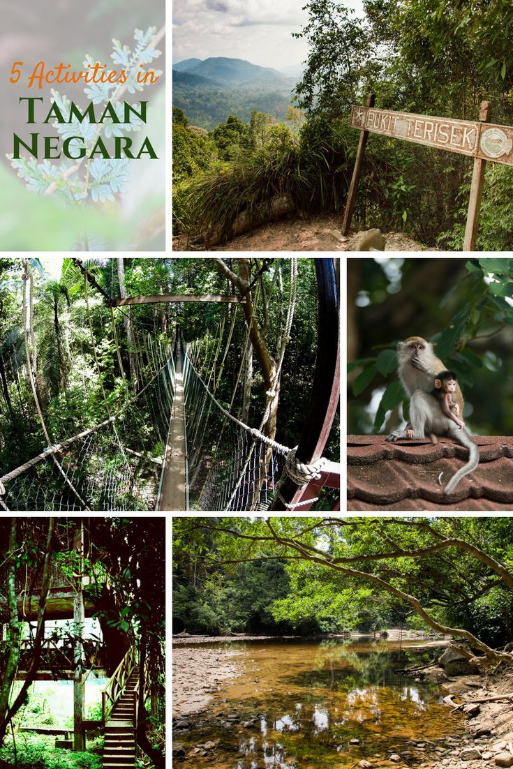 5 things to do in Taman Negara, Malaysia
