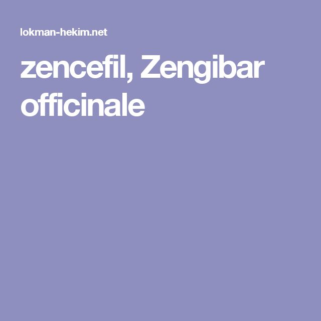 zencefil, Zengibar officinale