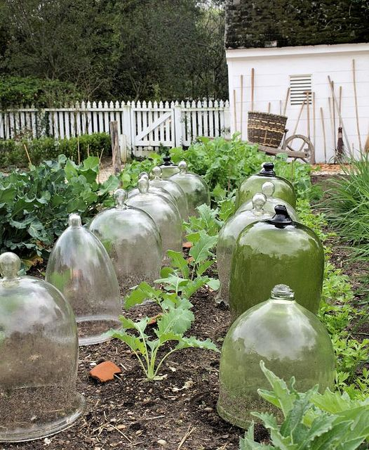 COLONIAL GARDENS | Reproduction bell jar in Colonial Williamsburg garden vegetable garden ...