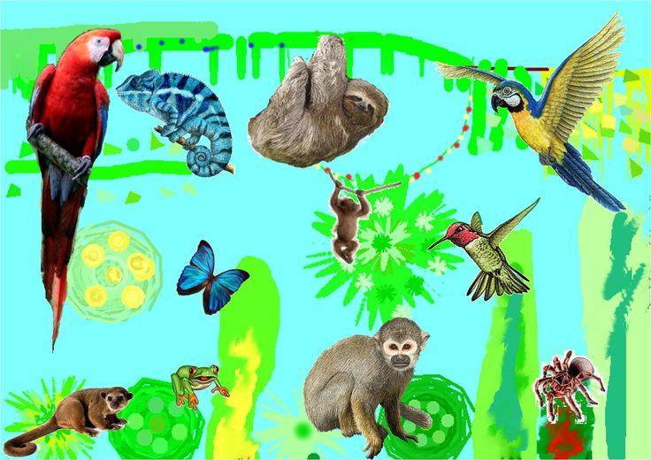 Claudia's Jungle