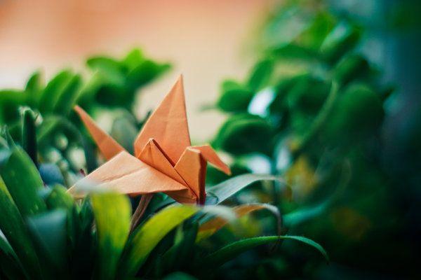 Jungle for the paper bird by DorottyaS.deviantart.com on @deviantART