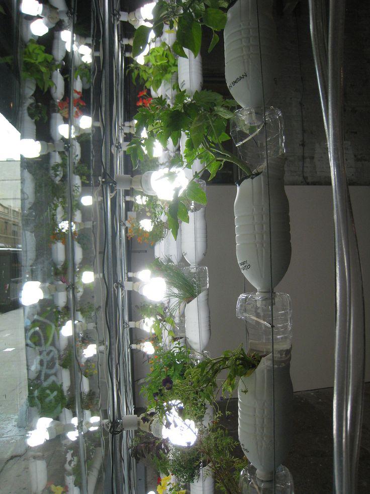 17 besten bromelien bilder auf pinterest sukkulenten luftpflanzen und pflanzen. Black Bedroom Furniture Sets. Home Design Ideas