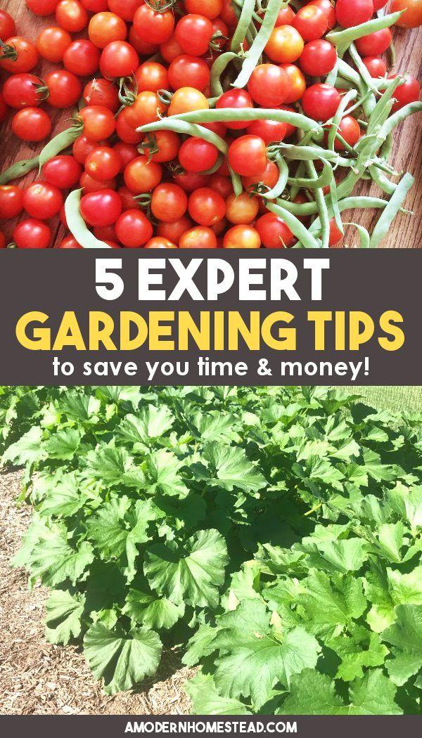 30b0a9280509c97f53b68ee29e8a1532 - Expert Gardener Organics Vegetable & Tomato Food