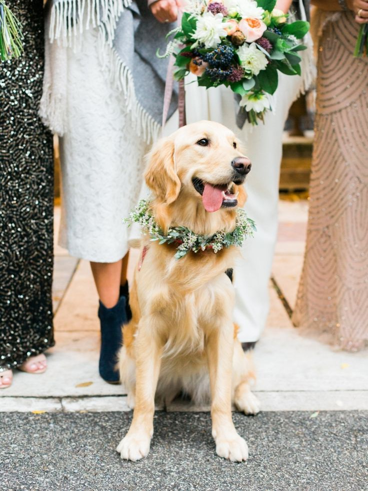 Golden retriever love: Photography: Dabble Me This - www.dabblemethis.com   Read More on SMP: http://www.stylemepretty.com/2016/08/23/modern-salvage-one-wedding/