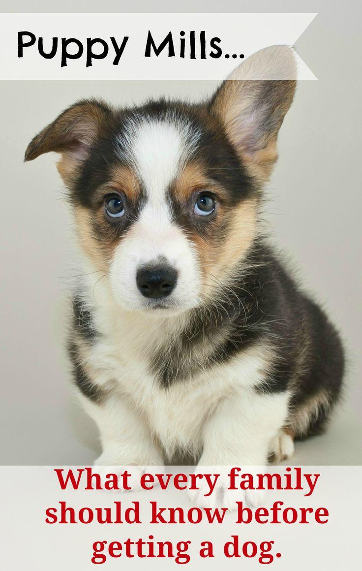 best 25 puppy mills ideas on pinterest puppy mill stop animal