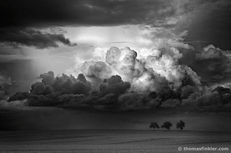 Thomas Finkler Fotografie, Landschaftsfotografie, Composing, dramatische Wetterstimmung, Regenwolken, Getreidefeld, 3 Bäume