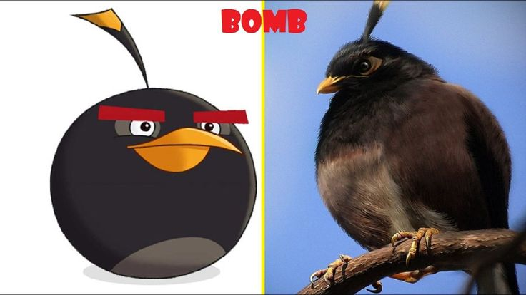 ALL CHARACTERS OF ANGRY BIRDS IN THE REAL LIFE 2017