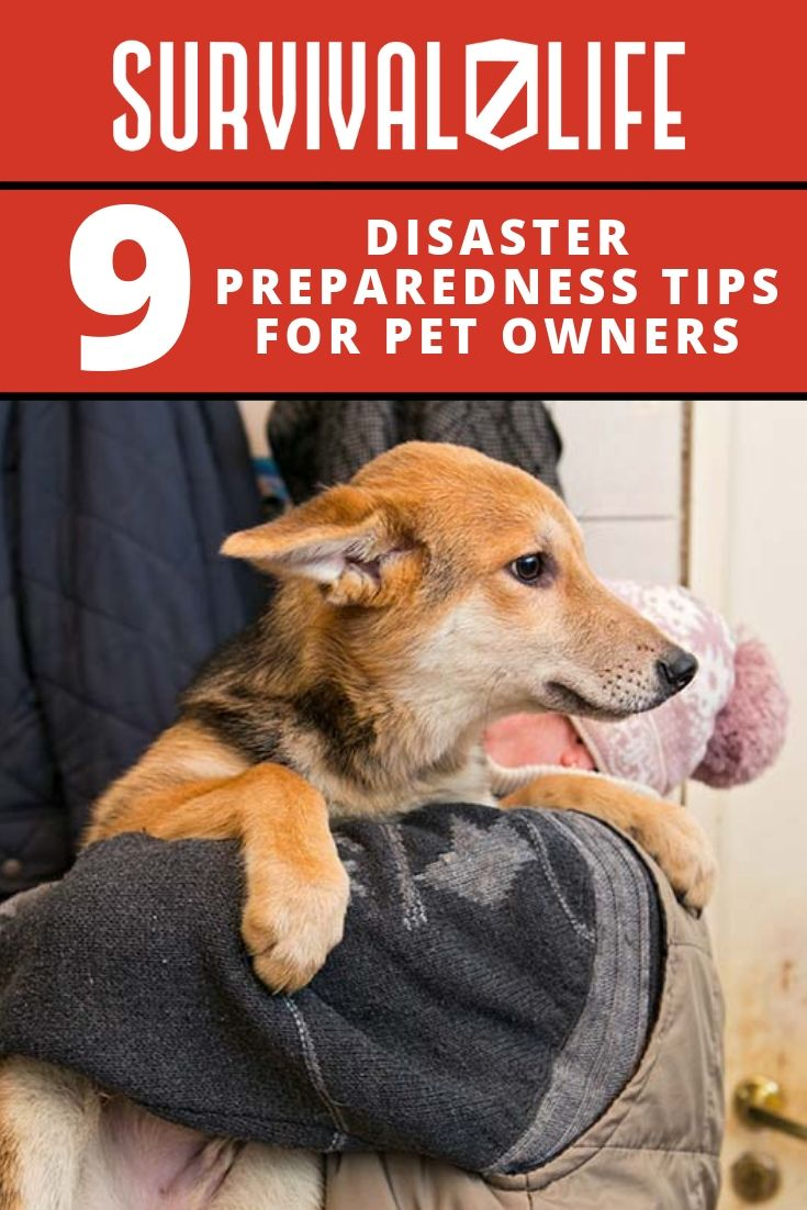 9 Suggestions For Pet House owners In Disasters