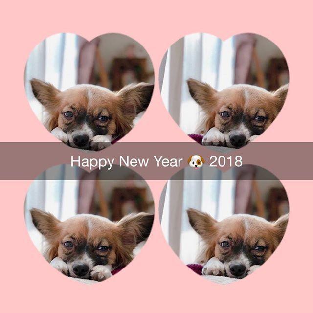 我が家のお犬様は寝正月のようです。今年もよろしくお願いし