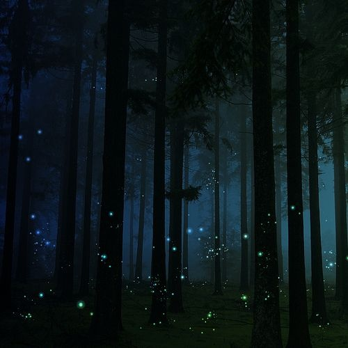 Firefly populations are threatened, list of things you can do to help: http://www.firefly.org/