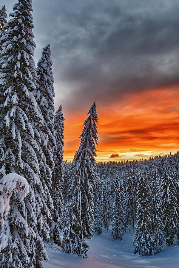 Snow and Sunrise, Pamporovo, Rhodope Mountains, Bulgaria