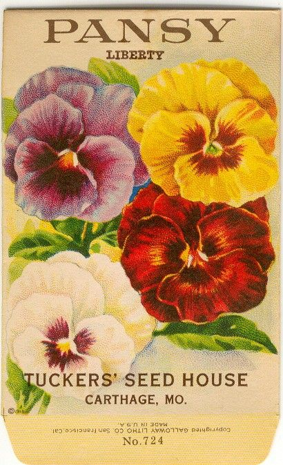 Vintage Flower Seed Packet Tuckers Seed House Lithograph PANSY
