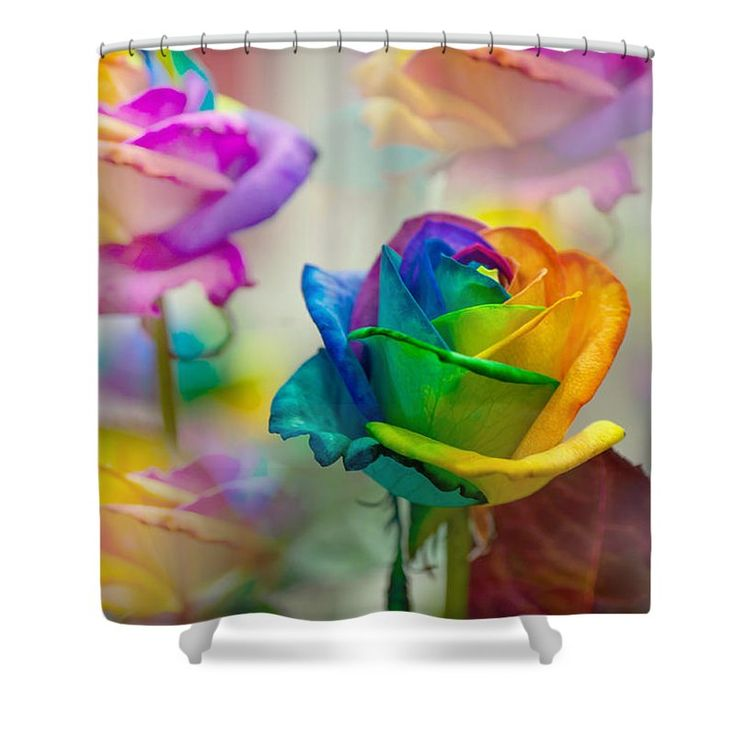 Rose Shower Curtain featuring the photograph Dreams Of Rainbow Rose by Jenny Rainbow