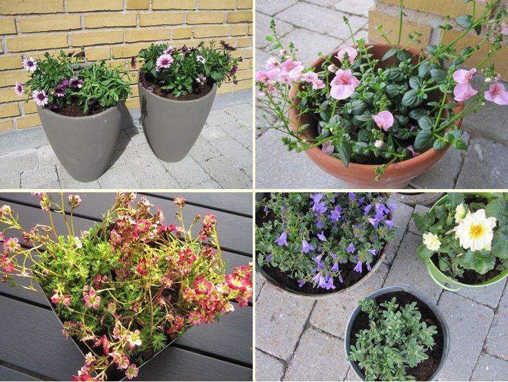 Blomster og krukker til terrasse