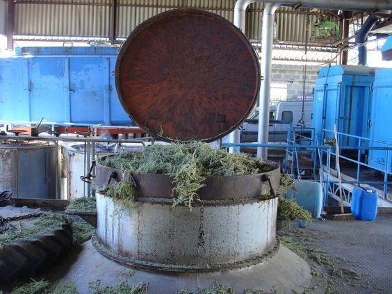 Destilación de PINO (Francia)