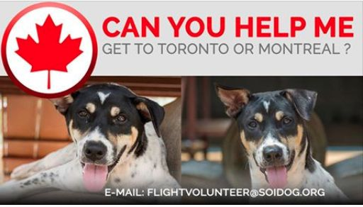 Can you help us get adopted Jamemar to his new home? *** FLIGHT VOLUNTEERS WANTED *** If you are traveling FROM Thailand TO Toronto OR Montreal, on BOOKED tickets with Thai Airways, All Nippon Airways (ANA), China Airlines, Qatar, Korean Air, JAL, EVA, Lufthansa or KLM, please EMAIL jan@soidog-foundation.org for more information. http://www.soidog.org/en/be-a-flight-volunteer