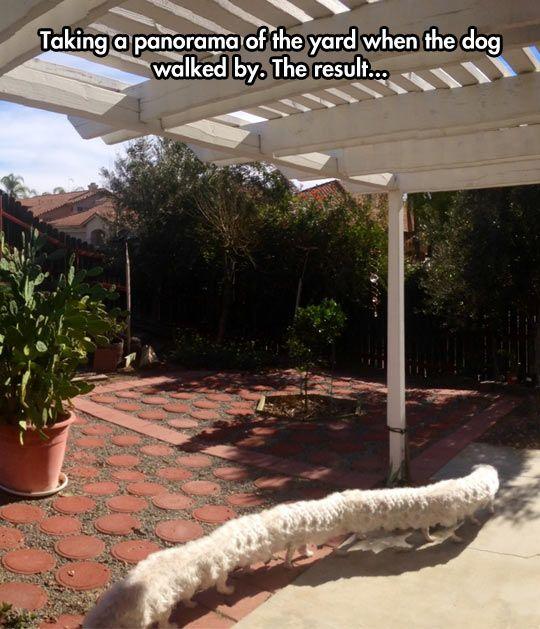 Dogerpillar in the backyard…