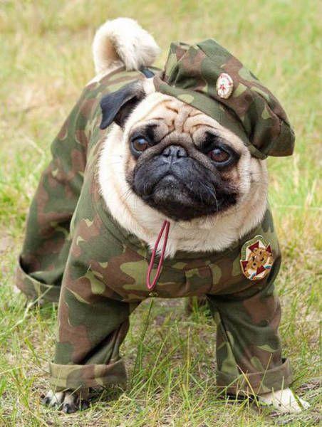 Le meilleur de l'humour militaire en 50 photos - page 3