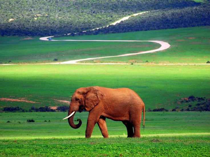 South African Road Trip: Self Drive Safari at Addo National Park - Bruised Passports