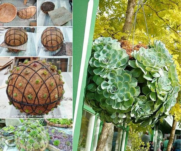 Succulent hanging dome