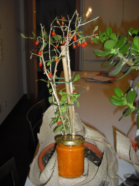 Mountain Goji Pflanzen