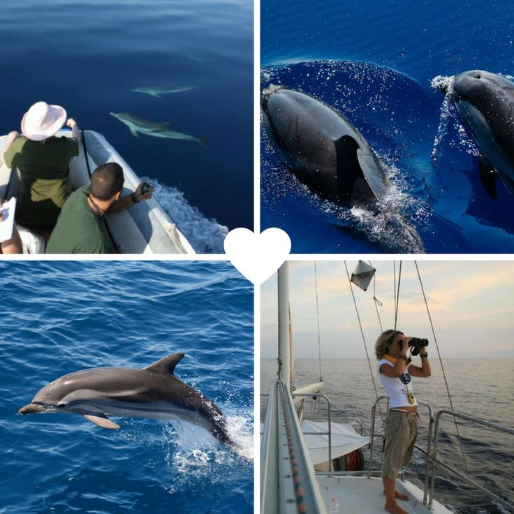All across Europe, we have several amazing volunteer projects working with Dolphin conservation and research. From Croatia to Spain - JOIN us this summer!