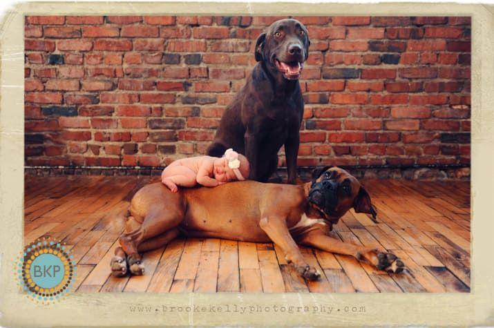 Fotos como éstas son una composición: primero se toma una fotografía de los perros y después una del recién nacido, con la mamá o el papá sosteniéndolos por detrás. Luego se fusionan las imágenes, se borran las manos con Photoshop y queda este trío tan unido.