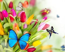 Beautiful Bright Coloured Butterfly HD Wallpapers free download at Hdwallpapersz.net