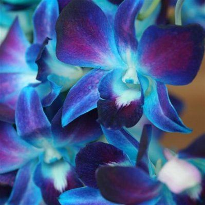 These are georgous-wont match my wedding, but I love them.    The following description is super wrong  these are blue dendribium orchids and i want them for my flowers ;) ...Purple Irises put in dyed blue water.. create the most beautiful flowers I've ever seen. These WILL be the main flower of my wedding someday