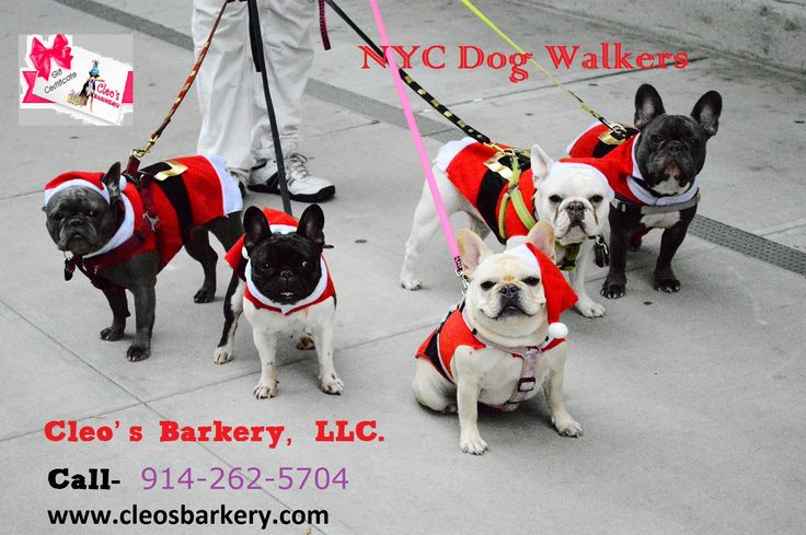 NYC Dog Walkers In New York  Cleo's Barkery, LLC is a bonded as the private dog walks by experienced insuredNYC Dog Walkers, and insured company consistently ranked as the best run and most trusted dog-walking service in Hartsdale, New York. For Dog Walking NYC Call 914-262-5704 and visit at www.cleosbarkery.com #NYC #Dog #Walkers #Dog #Walking #NYC