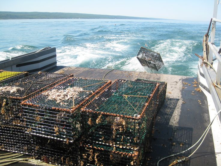 246 best images about bay of fundy on pinterest cove for Nova scotia fishing