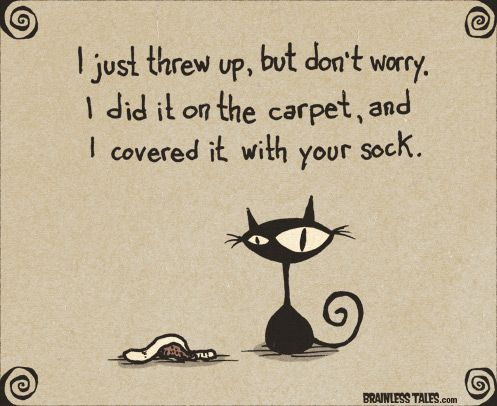 I Just Threw Up, But Don't Worry, I Did It On The Carpet, And I Covered It With Your Sock. (Brainless Tales Cat)