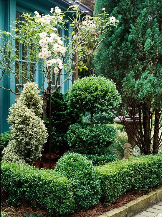 """Love this composition: variegated spiral, corner boxwood """"column"""", 3 tier topiary, tall dark evergreen on the corner, delicate white blooms in the center. Many different elements in a tiny harmonious arrangement."""