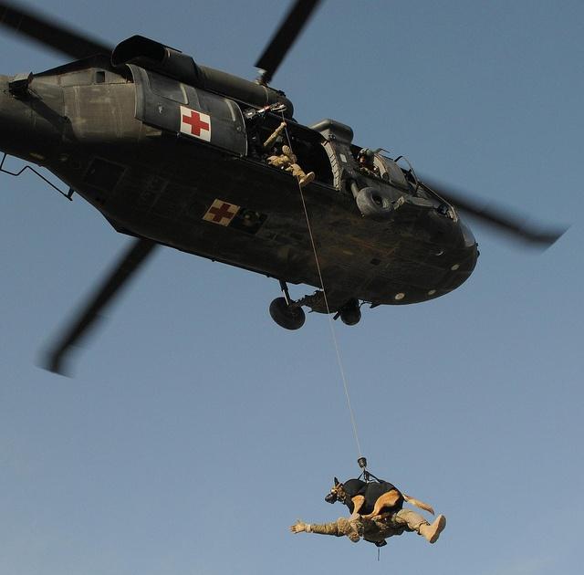 Military working dog takes flight