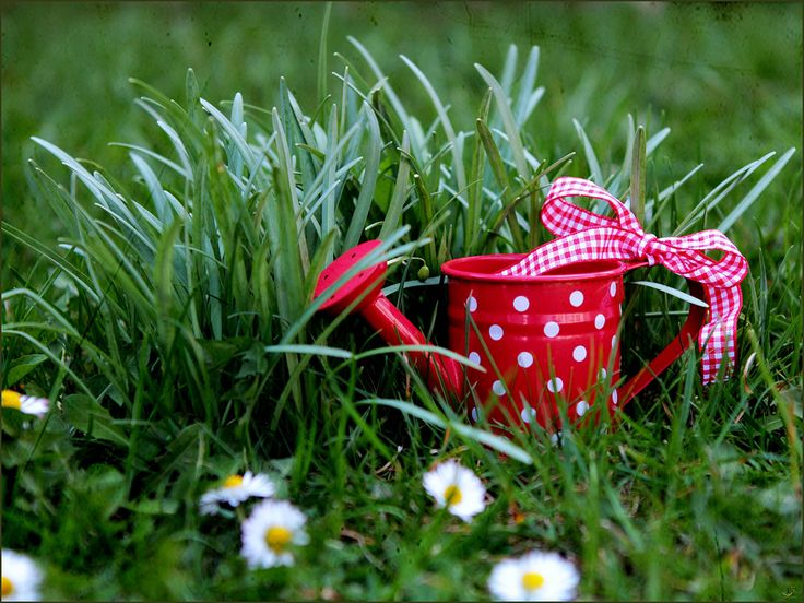 ❀ red watering can ❀ | Flickr - Photo Sharing!