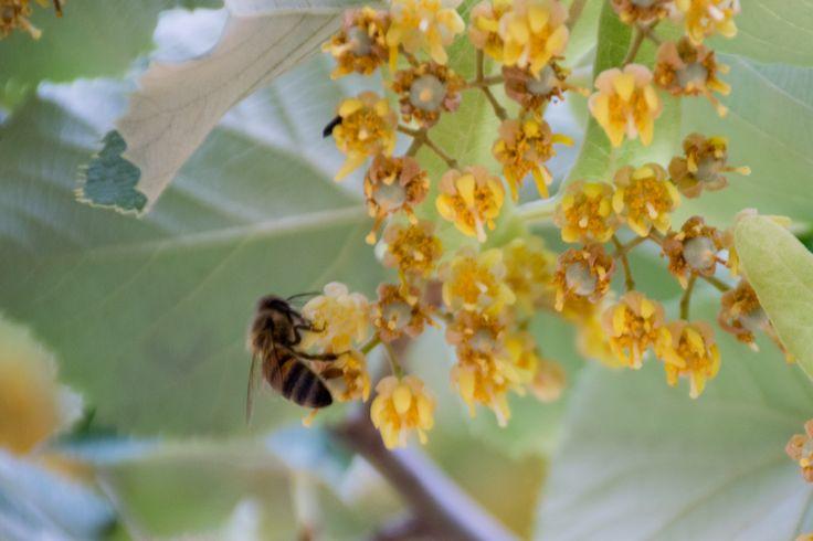 les 25 meilleures id es de la cat gorie abeilles sur pinterest apiculture de jardin et. Black Bedroom Furniture Sets. Home Design Ideas